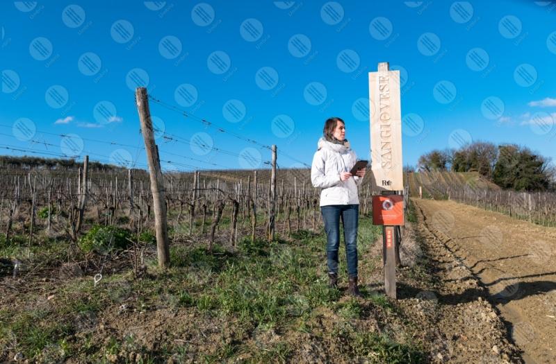vigneto vino campi colline ragazza donna strumento cielo cielo sereno tecnologia innovazione  Umbria
