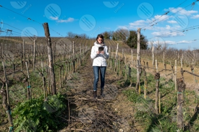umbria vineyard wine fields hills girl woman tool sky clear sky technology innovation