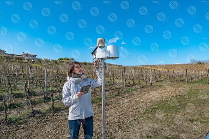 vigneto vino campi colline ragazza donna strumenti tecnologia innovazione cielo cielo sereno  Umbria
