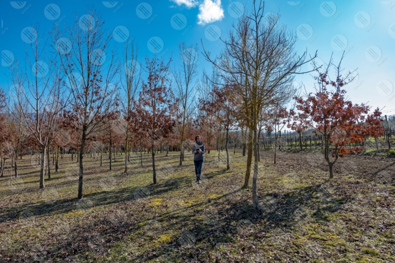 vigneto vino campi colline ragazza donna strumento alberi tecnologia innovazione cielo cielo sereno  Umbria