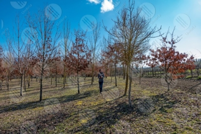 umbria vineyard wine fields hills girl woman tool trees technology innovation sky clear sky
