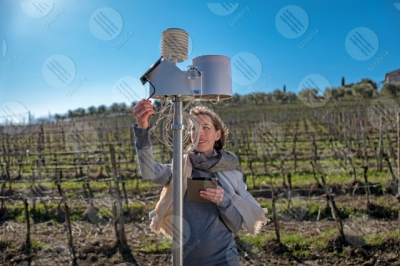 umbria vineyard wine fields hills woman girl tools technology innovation sky clear sky
