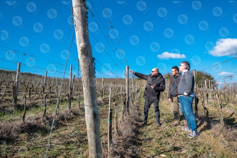vigneto vino campi colline uomini lavoratori strumento tecnologia innovazione cielo cielo sereno  Umbria
