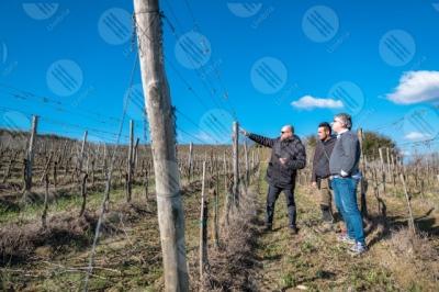 umbria vigneto vino campi colline uomini lavoratori strumento tecnologia innovazione cielo cielo sereno