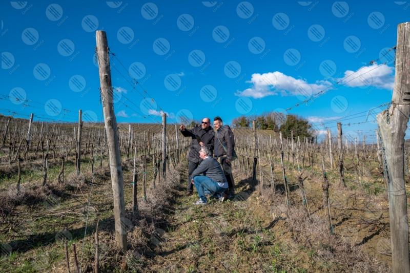 vigneto vino campi colline uomini lavoratori strumento tecnologia innovazione cielo sereno cielo  Umbria