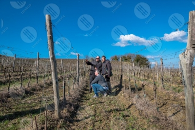 umbria vineyard wine fields hills men workers tool technology innovation sky clear sky