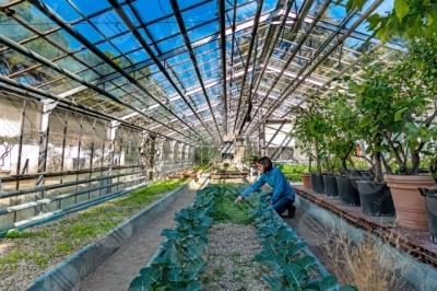 umbria greenhouse countryside crops plants girl woman trees