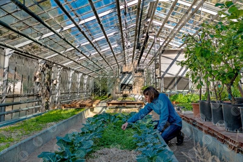 serra campagna coltivazioni piante ragazza donna alberi  Umbria
