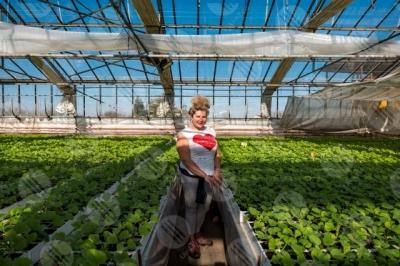 umbria agricoltura coltivazione serra piantine lavoro lavoratrice ragazza