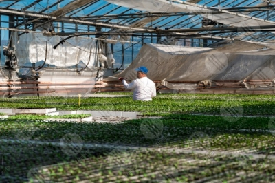 umbria agricolture cultivation greenhouse seedlings work worker man