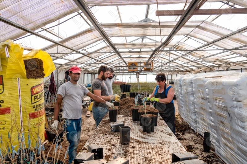 agricoltura coltivazione serra lavoro lavoratori persone  Umbria