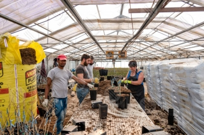 umbria agricolture cultivation greenhouse work workers people