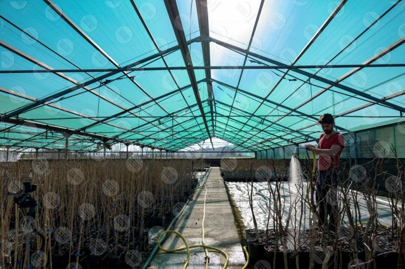 agricoltura coltivazione serra lavoro lavoratore uomo  Umbria