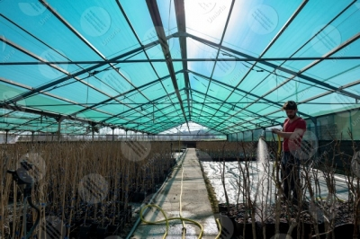 umbria agricolture cultivation greenhouse work worker man