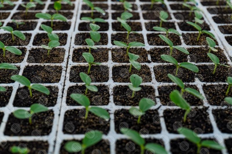 agricoltura coltivazione piantine serra dettagli particolari  Umbria