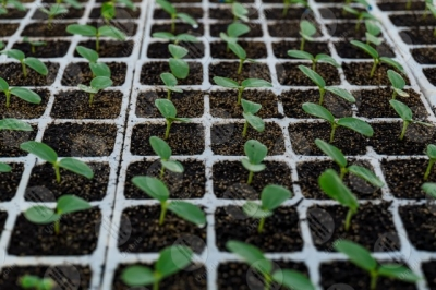 umbria agricolture cultivation seedlings greenhouse details particulars