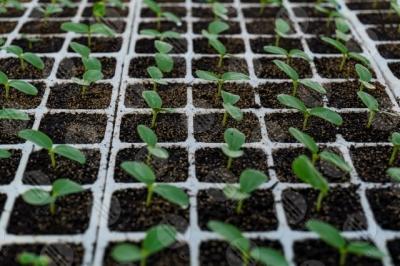 umbria agricoltura coltivazione piantine serra dettagli particolari