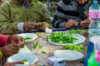 umbria agricoltura coltivazione piantine serra lavoro lavoratori persone dettagli particolari