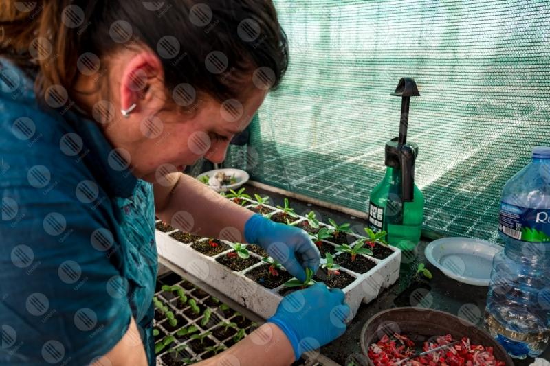 agricoltura coltivazione piantine serra lavoro lavoratrice donna dettagli particolari  Umbria