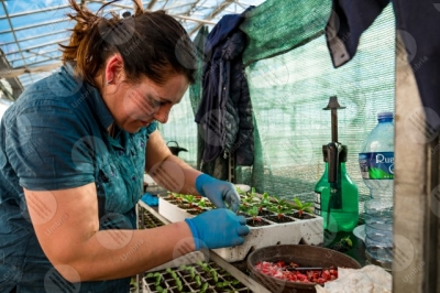 umbria agricolture cultivation seedlings greenhouse work workers woman details particulars