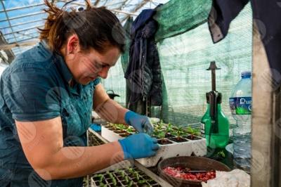 umbria agricoltura coltivazione piantine serra lavoro lavoratrice donna dettagli particolari