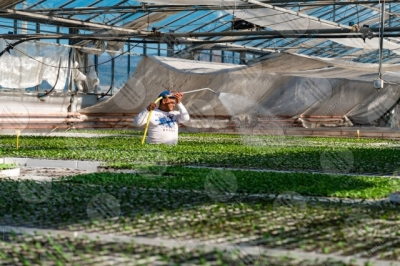 umbria agricolture cultivation seedlings greenhouse work workers man