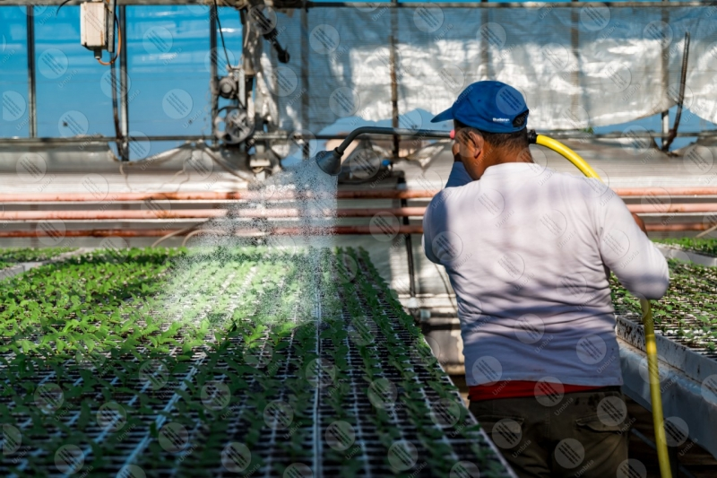 agricolture cultivation seedlings greenhouse work worker man  Umbria