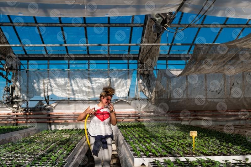 agricoltura coltivazione serra piantine lavoro lavoratore ragazza  Umbria