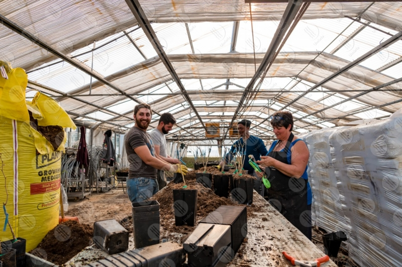 agricolture cultivation greenhouse work workers people  Umbria
