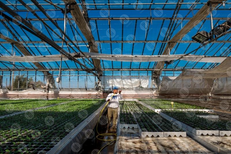 agricoltura coltivazione serra piantine lavoro lavoratore uomo  Umbria