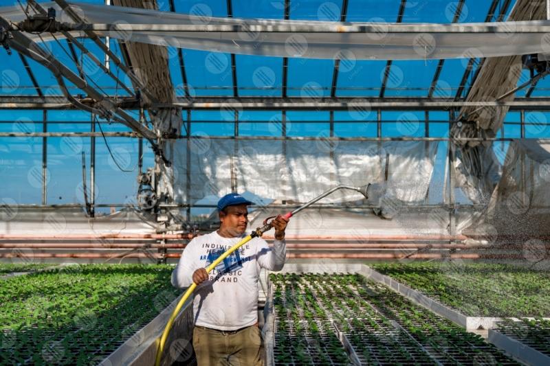 agricolture cultivation greenhouse seedlings work worker  Umbria