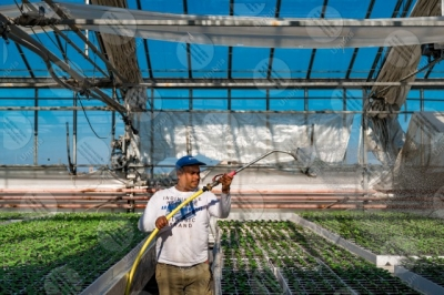 umbria agricolture cultivation greenhouse seedlings work worker