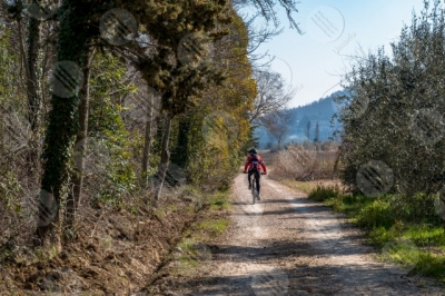 trasimeno bike bicycle cyclist pathway wood trees sky clear sky man