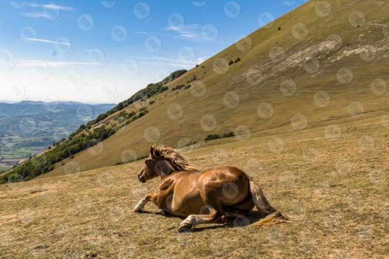 parco Monte Cucco cavallo cielo panorama vista colline montagne  Eugubino - Altochiascio
