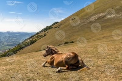 eugubino-altochiascio park Monte Cucco horse sky landscape view hills mountains