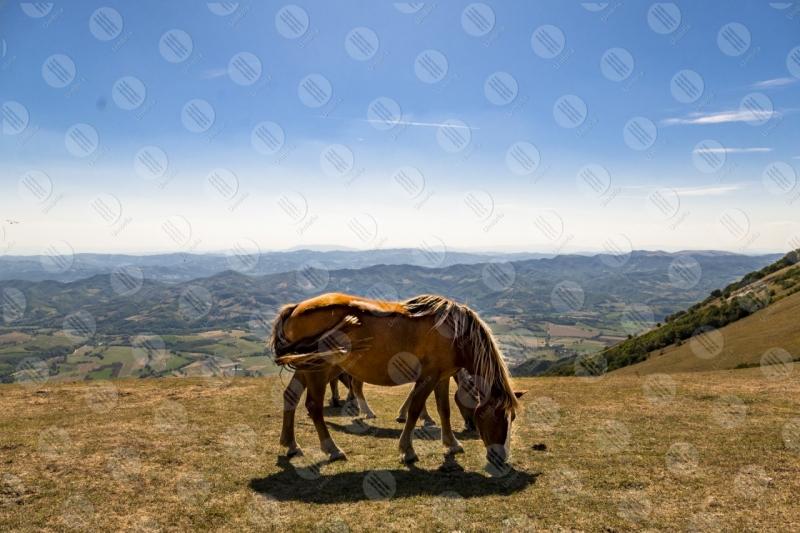parco Monte Cucco cavalli cielo vista panorama colline montagne  Eugubino - Altochiascio