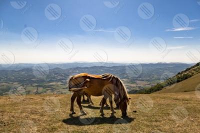 eugubino-altochiascio park Monte Cucco horses sky view landscape hills mountains