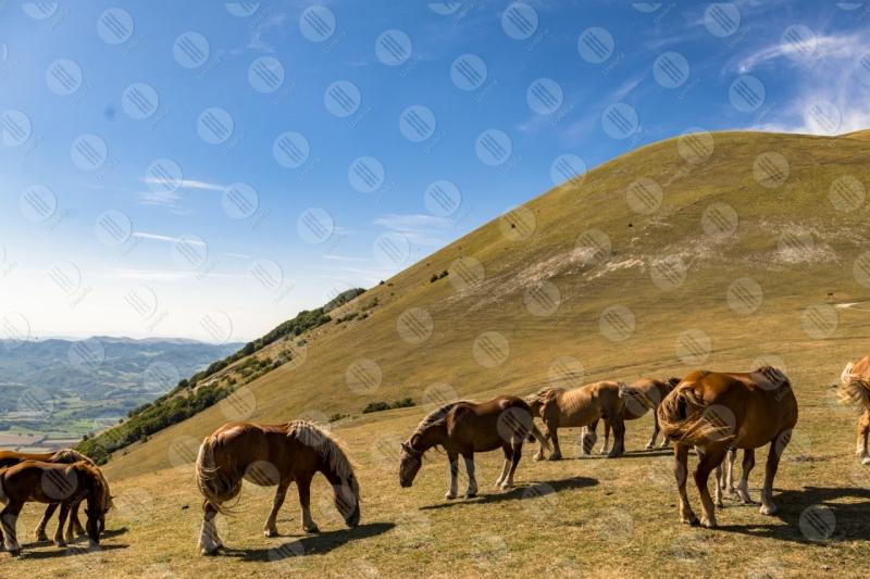 parco Monte Cucco cavalli cielo panorama colline montagne vista  Eugubino - Altochiascio